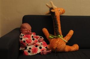 Newborn girl pictured with stuffed giraffe on navy sofa