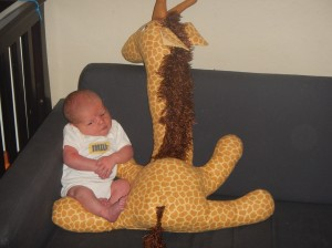 Newborn posed with giant stuffed giraffe on navy sofa