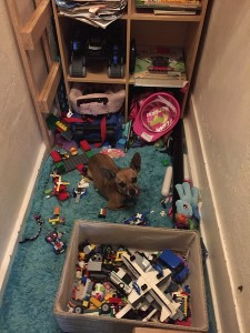 Chihuahua small dog in middle of mess of toys on rug in closet