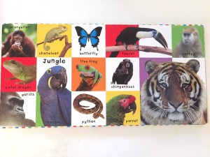 Inside a page spread on jungle animals of First 100 Animals bright baby board book