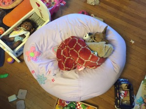 Chihuahua dog sleeping on bean bag chair surrounded by toys