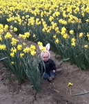 Infant sitting in field of daffodils wearing white bunny ears on headband