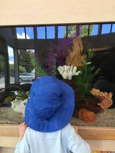 Young child looking at fish tank while wearing blue sun hat