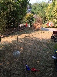 Wiffle ball hung on string in yard suspended from tree branch