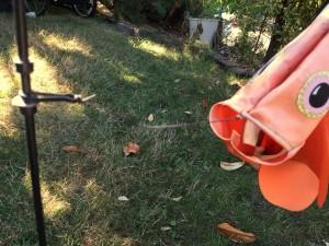 Clownfish close up windsock kite yard display