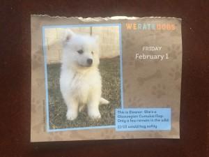 Eleanor We Rate Dogs calendar cumulus flop dog
