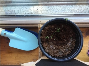 Pot with few sprouts and kid's gardening shovel trowel next to it