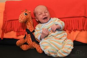 Newborn infant posed on sofa with giraffe stuffed animal screaming crying