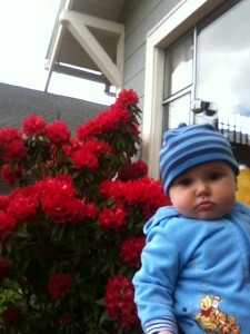 Baby wearing all blue in front of blooming red rhododendron bush for Mother's Day photos