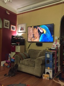 Cat watching nature show on TV