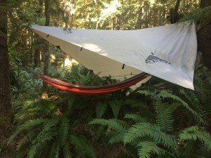 Eagles Nest Outfitters ENO doublenest orange hammock hanging over ferns under tarp