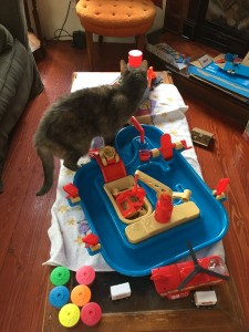 Cat next to American Plastic Toys sand and water play set on coffee table