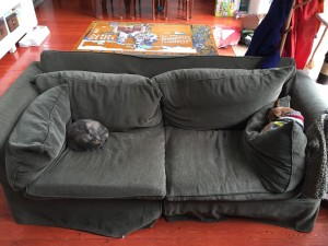 Sofa Mitchell Gold Zoe in dark green with cat sleeping on one end and dog sleeping on the other