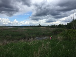 Kids playing in tall grass of wetlands on partly cloudy day