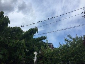 Birds on cable wire against partly cloudy sky background with tops of trees