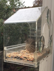 Nature Gear clear window bird feeder installed on window with bird eating inside