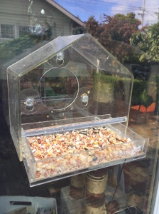 Nature Gear clear window bird feeder attached with suction cups as seen from outside with drawer open