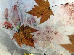Leaf Sun Catcher 2