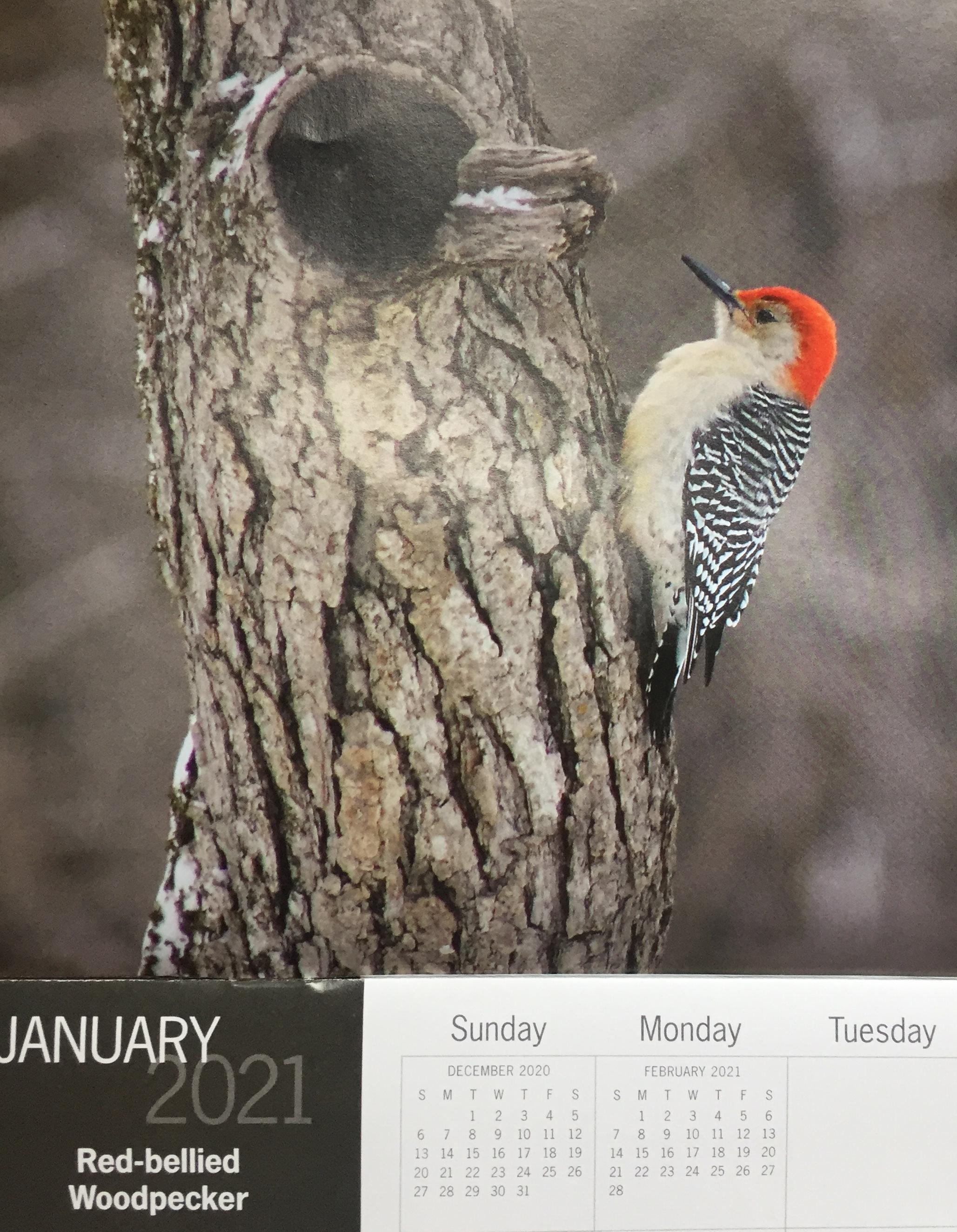 January 2021 calendar featuring red-bellied woodpecker